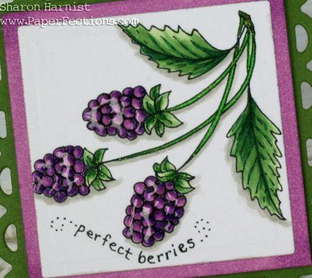 PerfectBerriesMagnetCU-SH